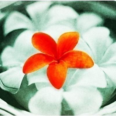 緬梔花 ~花之歌~ 專輯封面