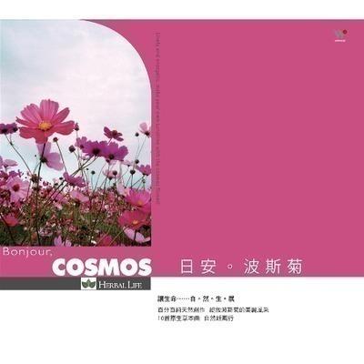 日安波斯菊 專輯封面