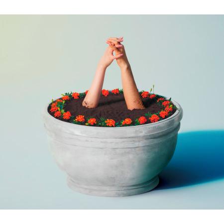 金盞花 專輯封面