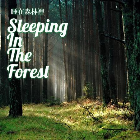 睡在森林裡 Sleeping In The Forest 專輯封面