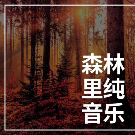森林裏純音樂: 失眠時聽的浪漫安靜歌曲爲了休息和深度睡覺 專輯封面