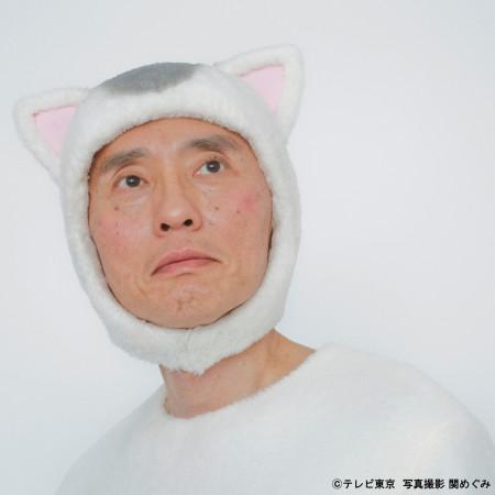 貓村之歌 專輯封面
