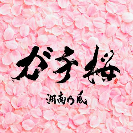 Gachizakura 專輯封面