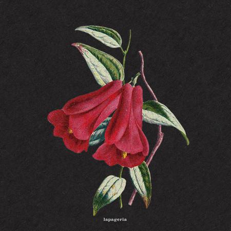 Flowers 專輯封面