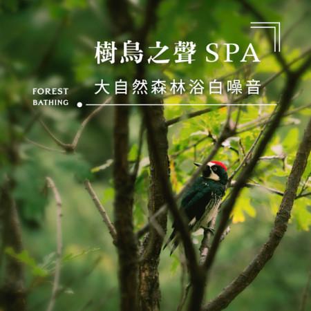 樹鳥之聲SPA.大自然森林浴白噪音 (Forest Bathing) 專輯封面