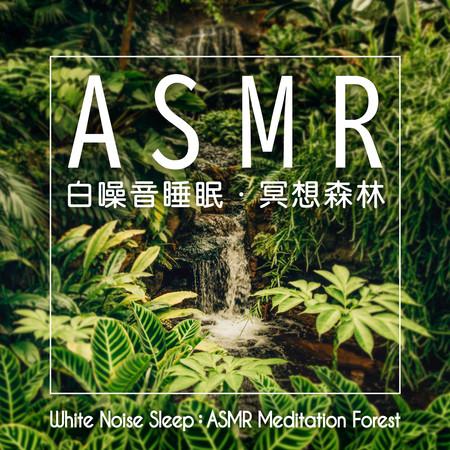 白噪音睡眠:ASMR冥想森林 (White Noise Sleep:ASMR Meditation Forest) 專輯封面