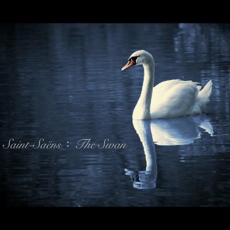 Saint-Saëns:The Swan 專輯封面