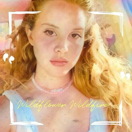 Wildflower Wildfire 專輯封面